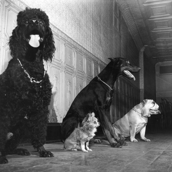 Waiting「Animal Training」:写真・画像(10)[壁紙.com]