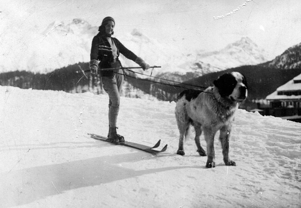 Winter Sport「St Bernard dog」:写真・画像(8)[壁紙.com]