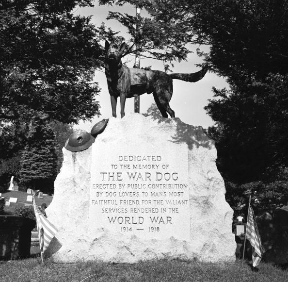 Monument「Dog Memorial」:写真・画像(10)[壁紙.com]