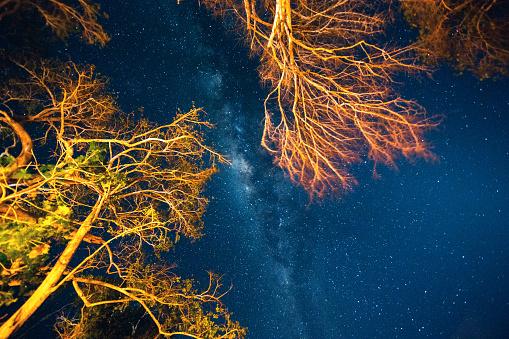 star sky「星空の下で」:スマホ壁紙(14)