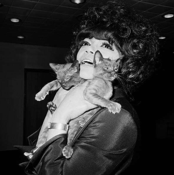 子猫「Kitt And Kittens」:写真・画像(2)[壁紙.com]