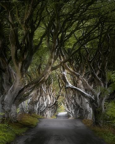 County Antrim「The Dark Hedges, Ballymoney, County Antrim, Northern Ireland, United Kingdom」:スマホ壁紙(11)