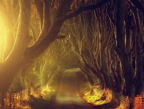 Northern Ireland「The Dark Hedges in County Antrim, Northern Ireland」:スマホ壁紙(19)