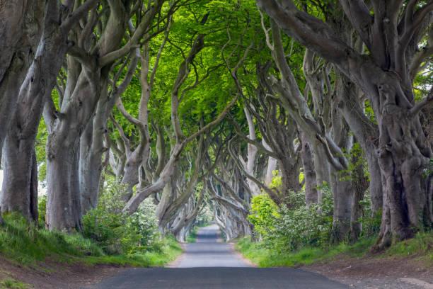 The Dark Hedges, Northern Ireland:スマホ壁紙(壁紙.com)