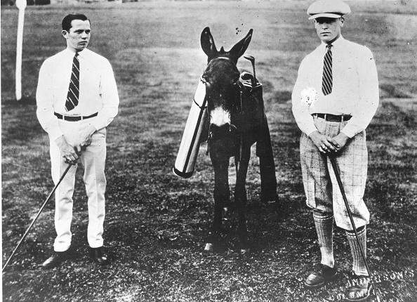 Animal「Donkey As Caddie」:写真・画像(10)[壁紙.com]