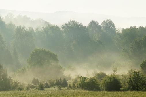 春「霧の朝は夜明け春の森にプリトビッチェクロアチアヒルズ」:スマホ壁紙(5)