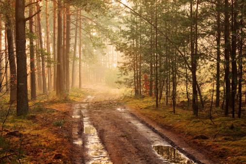 Dirt Road「Foggy Forest Road after the Rain」:スマホ壁紙(7)