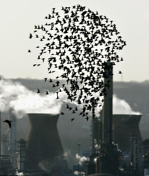 鳥「Report Blames Human Activity For Global Warming」:写真・画像(6)[壁紙.com]