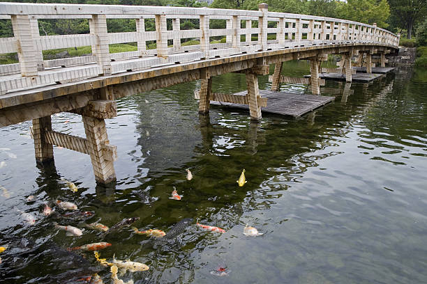 Koi carp in pond:スマホ壁紙(壁紙.com)