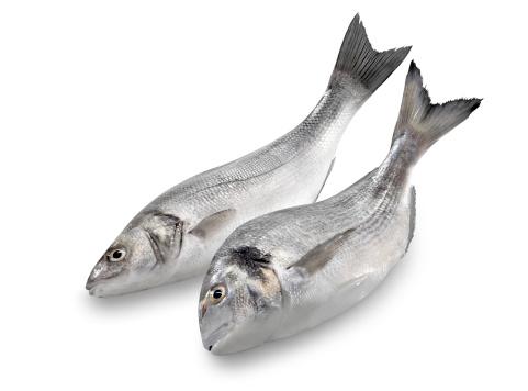 Sea Bream「Sea Bass & Bream」:スマホ壁紙(9)