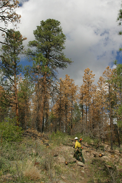Plant Bark「Bark Beetles Infest New Mexico's Forests」:写真・画像(16)[壁紙.com]