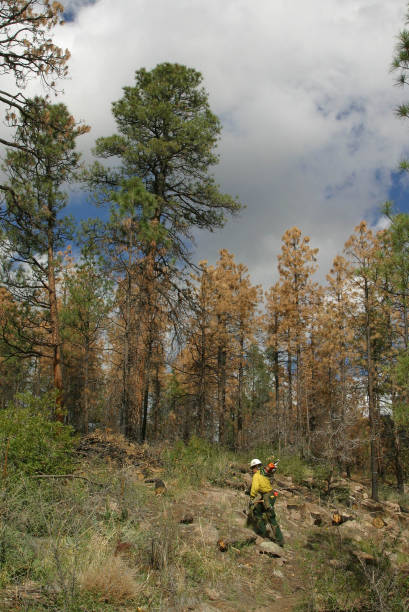Bark Beetles Infest New Mexico's Forests:ニュース(壁紙.com)