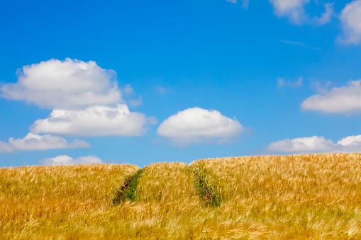月「Grain field with tracks in summer」:スマホ壁紙(5)
