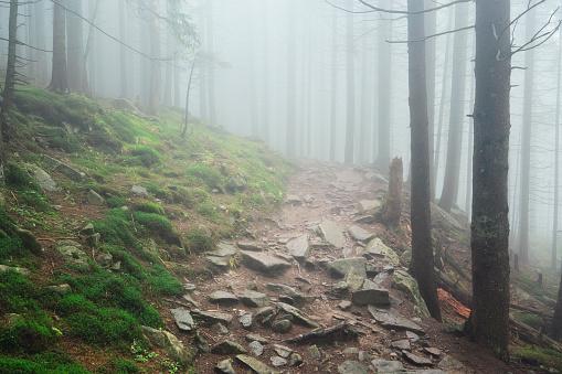 土「Ukraine, Ivano-Frankivsk district, Footpath in forest in fog」:スマホ壁紙(11)