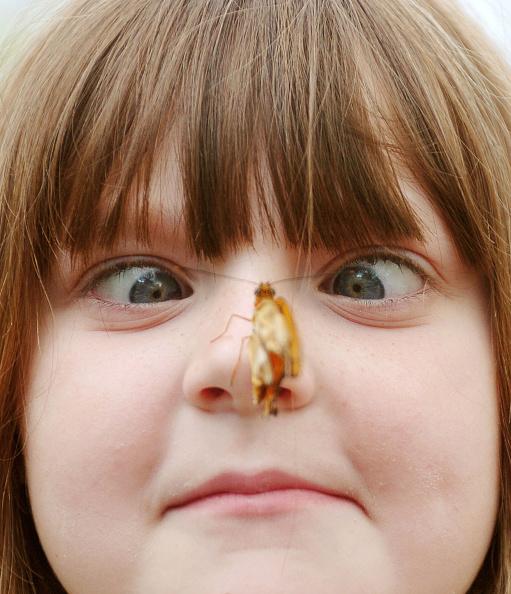 Elementary Age「2005 International Butterfly Show Held In Cincinnati」:写真・画像(1)[壁紙.com]