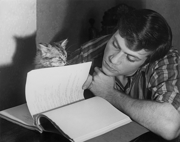 Hulton Archive「Oliver Reed And Kitten」:写真・画像(18)[壁紙.com]