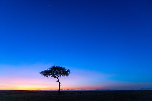 Dawn「Tree at dawn」:スマホ壁紙(18)
