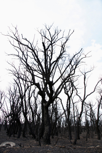 Deforestation「Spain, View of burnt forest」:スマホ壁紙(10)
