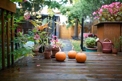 Real Life「Pumpkins in the backyard」:スマホ壁紙(9)