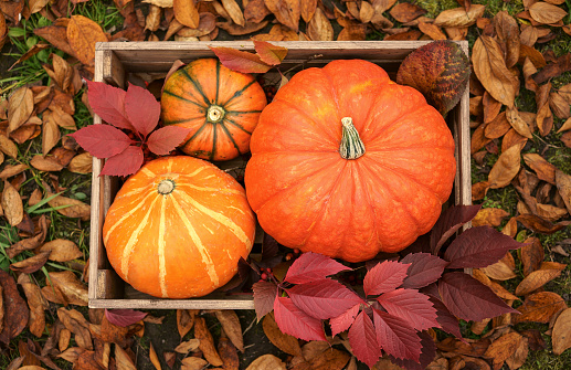 Grass Family「Pumpkins in wooden crate」:スマホ壁紙(16)