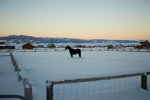 Wooden Post「Horse in snow」:スマホ壁紙(6)