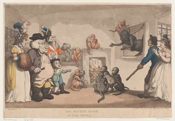 Animals In Captivity「The Monkey Room In The Tower」:写真・画像(8)[壁紙.com]