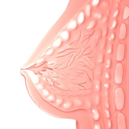 Breast「Female Breast」:スマホ壁紙(14)