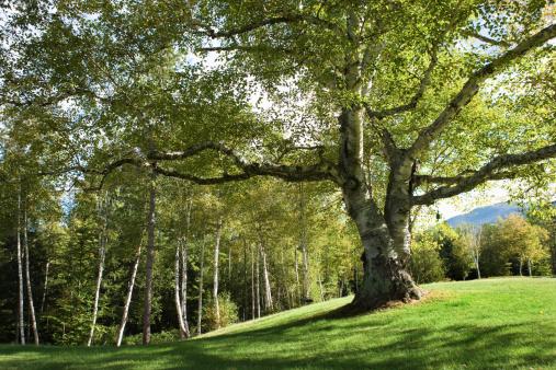Adirondack Mountains「Trees in the Adirondacks, New York」:スマホ壁紙(17)