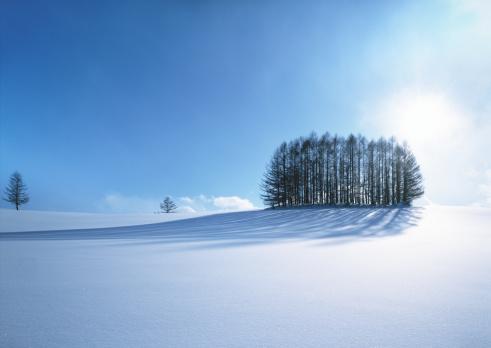 Biei Town「Trees in the snowfield」:スマホ壁紙(11)