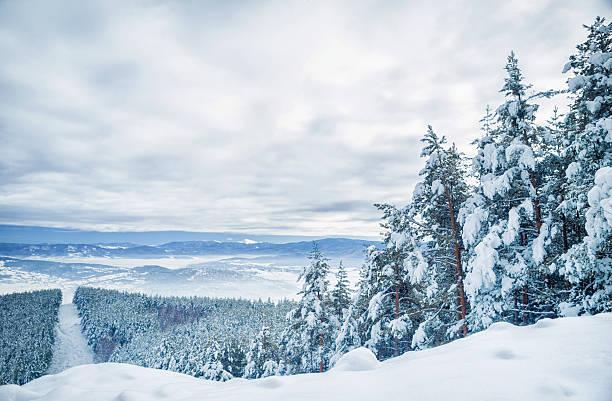Trees in the winter:スマホ壁紙(壁紙.com)