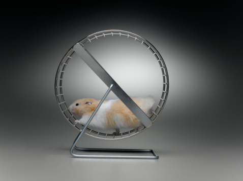Rodent「hamster on exercise wheel」:スマホ壁紙(13)