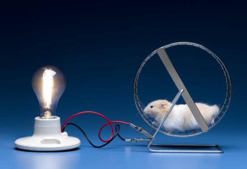 Working Animal「Hamster on wheel powering light bulb」:スマホ壁紙(9)