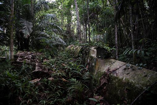 Airplane Crash「WWII aircraft overgrown in jungle in Aitape, Papua New Guinea」:スマホ壁紙(2)
