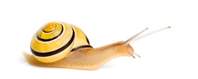 カタツムリ「Grove snail」:スマホ壁紙(12)