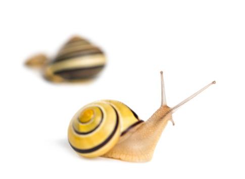カタツムリ「Grove snail」:スマホ壁紙(7)