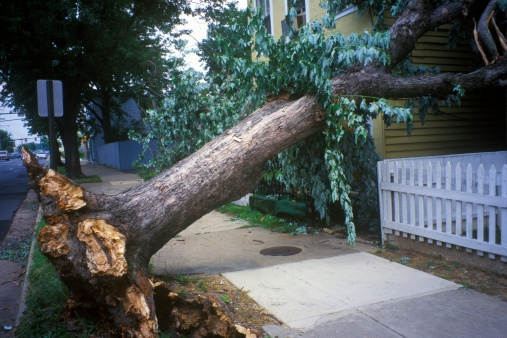"Destruction「""Tornado damage, downed tree between two houses, Alexandria, VA""」:スマホ壁紙(8)"