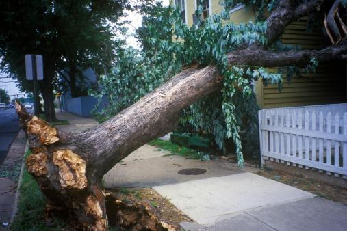 "Fallen Tree「""Tornado damage, downed tree between two houses, Alexandria, VA""」:スマホ壁紙(10)"