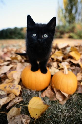 Kitten「Black Kitten Standing on Top of a Pumpkin」:スマホ壁紙(12)