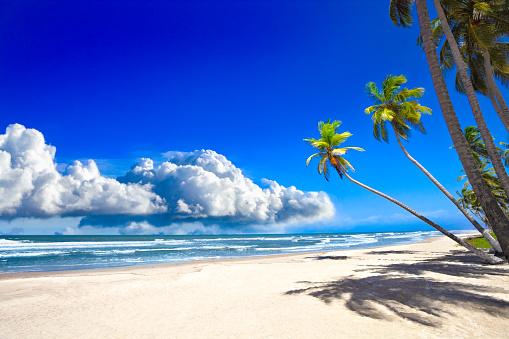 Island「Tropical sandy beach with coconut trees and deep blue sky」:スマホ壁紙(8)