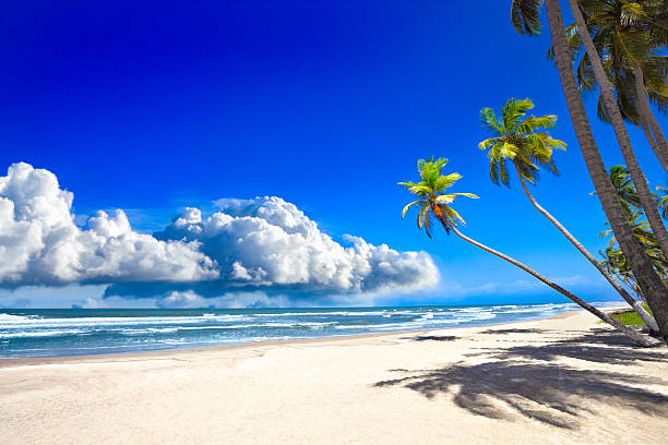 Tropical sandy beach with coconut trees and deep blue sky:スマホ壁紙(壁紙.com)