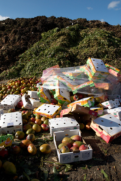 Environmental Conservation「Rotten fruit at site for recycling food and garden waste, Suffolk, UK」:写真・画像(11)[壁紙.com]