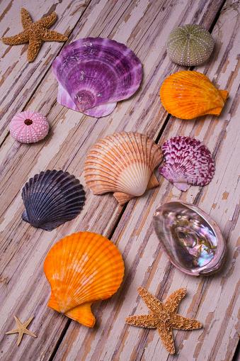 貝殻「Sea Shell Still life on boards」:スマホ壁紙(18)