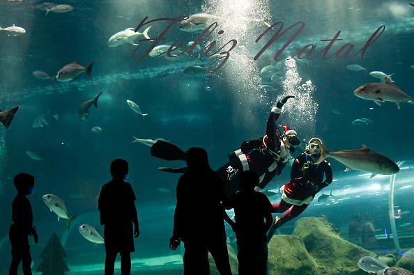 Infectious Disease「Christmas Time Arrives at AquaRio Aquarium Amidst the Coronavirus (COVID -19) Pandemic」:写真・画像(16)[壁紙.com]