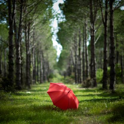 Umbrella「Red umbrella in forest」:スマホ壁紙(7)
