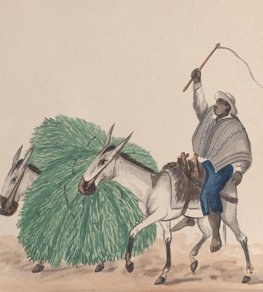 Grass「A Man Riding A Mule」:写真・画像(10)[壁紙.com]