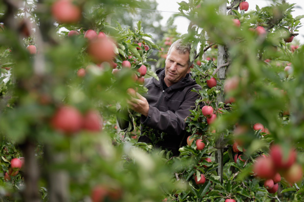 Harvesting「Apple Farmers To Receive EU Help Following Price Drop and Russian Sanctions」:写真・画像(3)[壁紙.com]