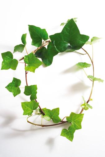 Ivy「Ivy leaves, Hedera helix」:スマホ壁紙(7)