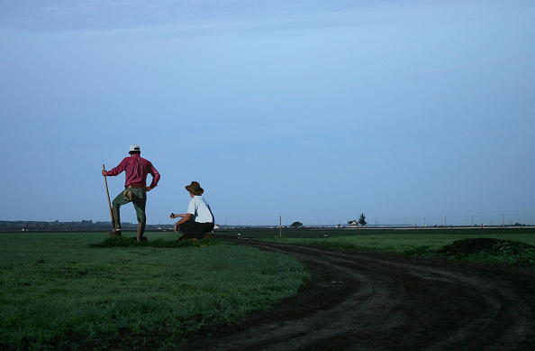 Farm Worker「Giant Statues Relay History Of California Farming」:写真・画像(2)[壁紙.com]