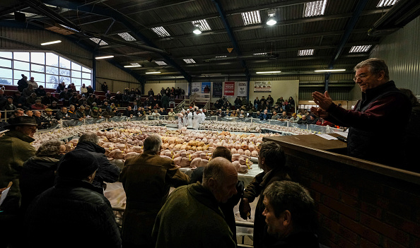 York - Yorkshire「Christmas Poultry Sold At York Auction」:写真・画像(19)[壁紙.com]