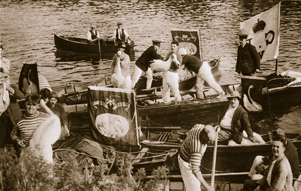 Physical Geography「Swan Upping On The Thames 20th Century」:写真・画像(9)[壁紙.com]